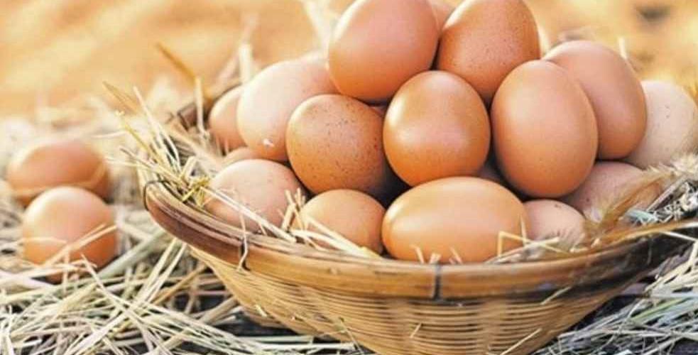 Yumurtanın Bozulduğu Nasıl Anlaşılır